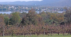 Autumn views from Hunters Valley Winery