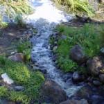 Wetlands at Parducci Wine Cellars in Mendocino County