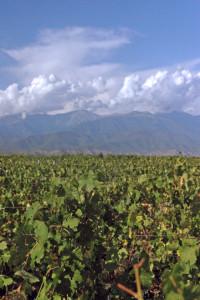 Caucasus Mountains and vineyards in Georgia