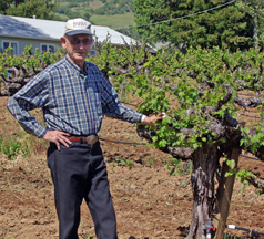Charlie Barra with his vines. This year marks his 69 harvest.