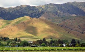 Vineyard view at Villa Maria in Marlborough, NZ