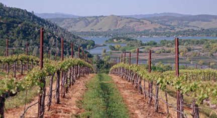 Vineyards near the Vigilance Winery tasting room in the Red Hills of Lake County AVA