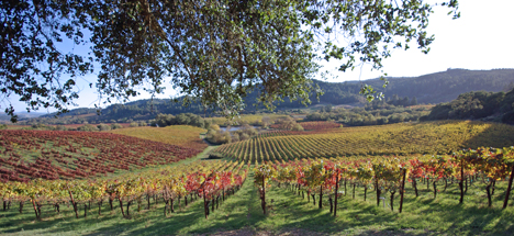 Vineyard view at Michel-Schlumberger Wine Estate in the Dry Creek Valley AVA of Sonoma County