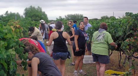 Harvest at Messina Hof in Bryan, Texas