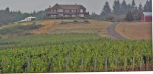 Young berg Hill Vineyard and Winery
