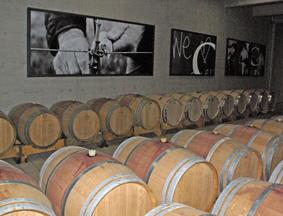 Kozlovi? Winery in Momjan,  Istria, Croatia, has vineyard photos in the barrel room. A gentle reminder that wine starts in the vineyard.