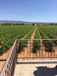 Vineyards at Vegalfaro in Requena