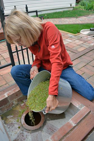 Kathy filling the qvevri with Rkatsiteli grapes. The Amazing Race did not show this part.