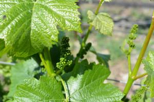 Claiborne & Churchill winery in San Luis Obispo