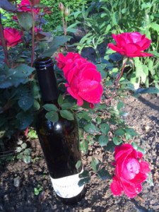 Plant a rose bush for National Wine Day!