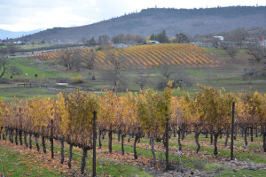 Vineyard Views in Rogue Valley, Oregon