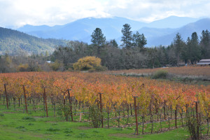 Dynamic view of vineyards and mountains of Applegate