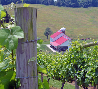 Thistlethwaite Vineyards in  Jefferson, Pennsylvania