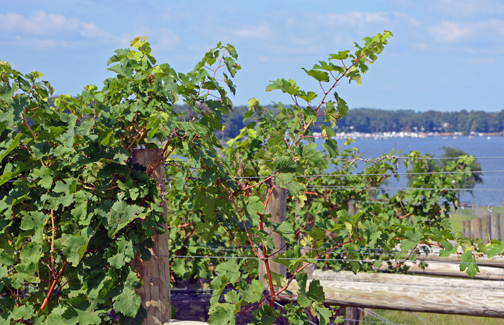 Chateau Bu-De Winery & Vineyard in Chesapeake City, Maryland