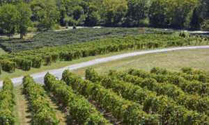 Loudoun County Food And Wine Festival