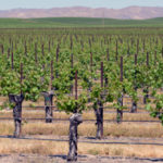 J. Lohr Vineyards & Wines in Paso Robles