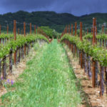 Famed Paul Dolan's vineyards in Mendocino