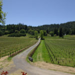 Vineyards at Yorkville Cellars in Mendocino