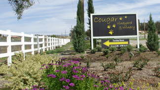 Cougar Vineyard and Winery