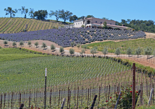 Daou Vineyards and Winery