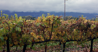 Honig Vineyard and Winery