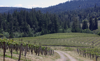 Husch Vineyards