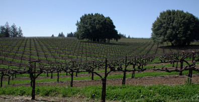 Mariah Vineyards