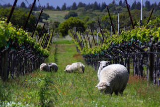 Picnic at Navarro Vineyard & Winery - Picture of Navarro Vineyards ...