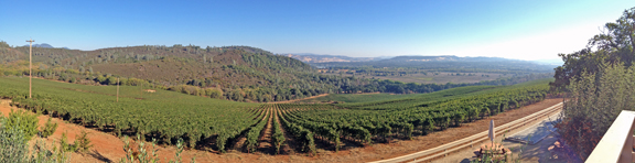 Shannon Ridge Vineyard