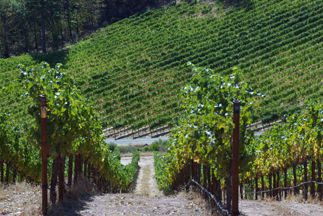 Snows Lake Vineyards