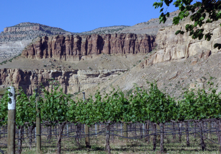 Canyon Wind Cellars