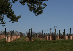 Loew Vineyards