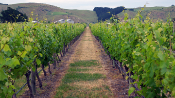 Craggy Range Winery, Gimblett Gravels