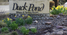Duck pond Cellars Winery