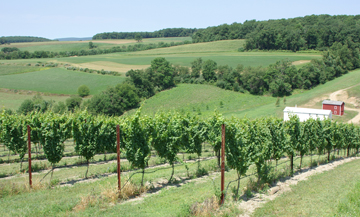 Pennsylvania vineyard