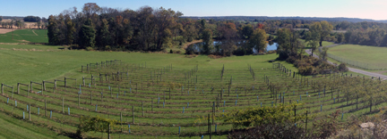 Vineyard at Hershey