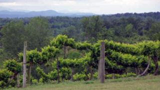Tennessee Mountainview Winery and Morris Vineyard