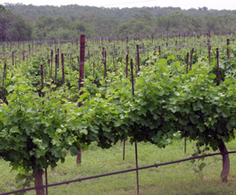 Texas Hills Vineyard