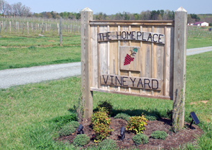 The Homeplace Vineyard