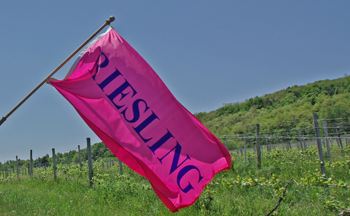 Riesling in the Finger Lakes